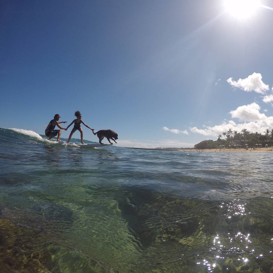 Hawaii Surf Dogs - Best Surf Experience for Kids, North Shore Oahu