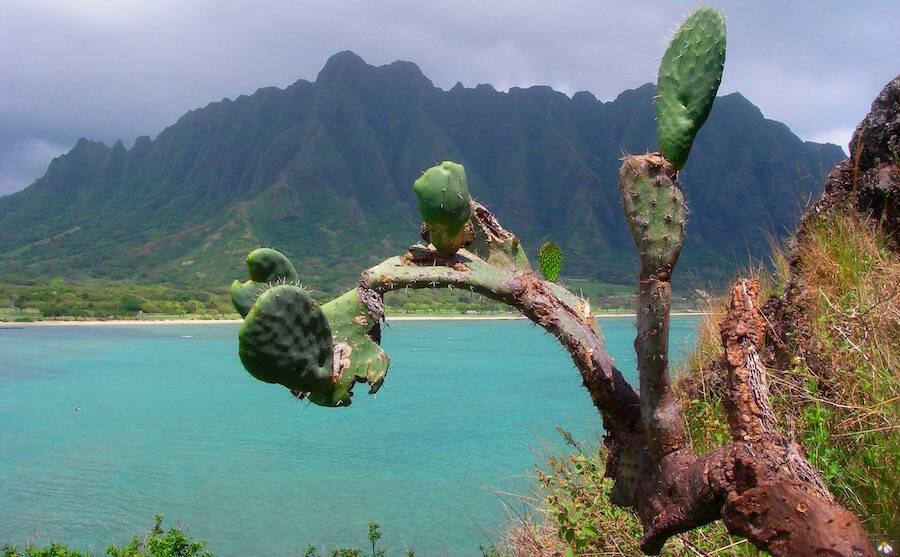 Mokoli'i Island Chinaman's Hat Oahu