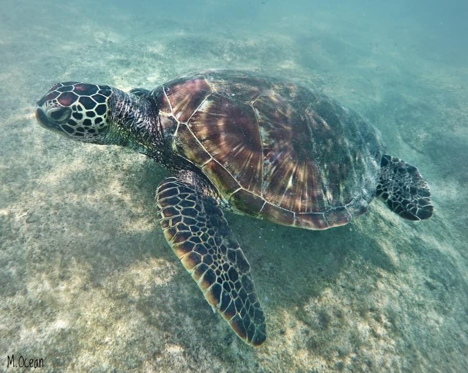 Hawaiian Electric Beach Kapolei Sea Turtle