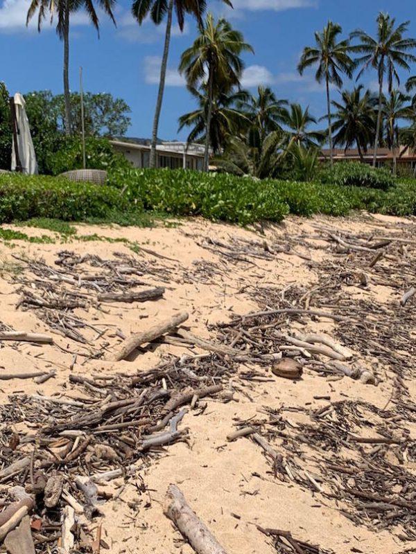 Best Beachcombing Oahu