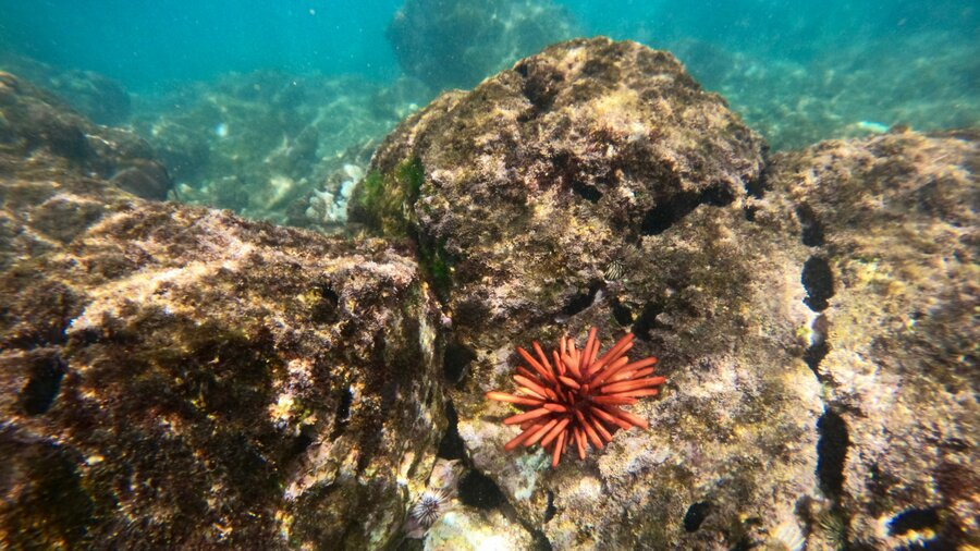 Where to Snorkel North Shore Oahu