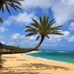 Crooked Palm Tree at Sunset Beach